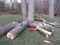 Tree Cut (10)