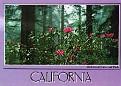 Redwoods NP 3