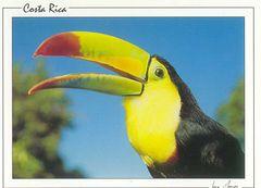 Costa Rica - TOUCAN NB
