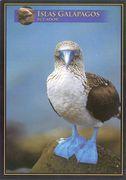 Galapagos - BLUE-FOOTED BOOBIE NB