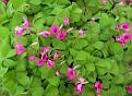 Colori Primavera :-)