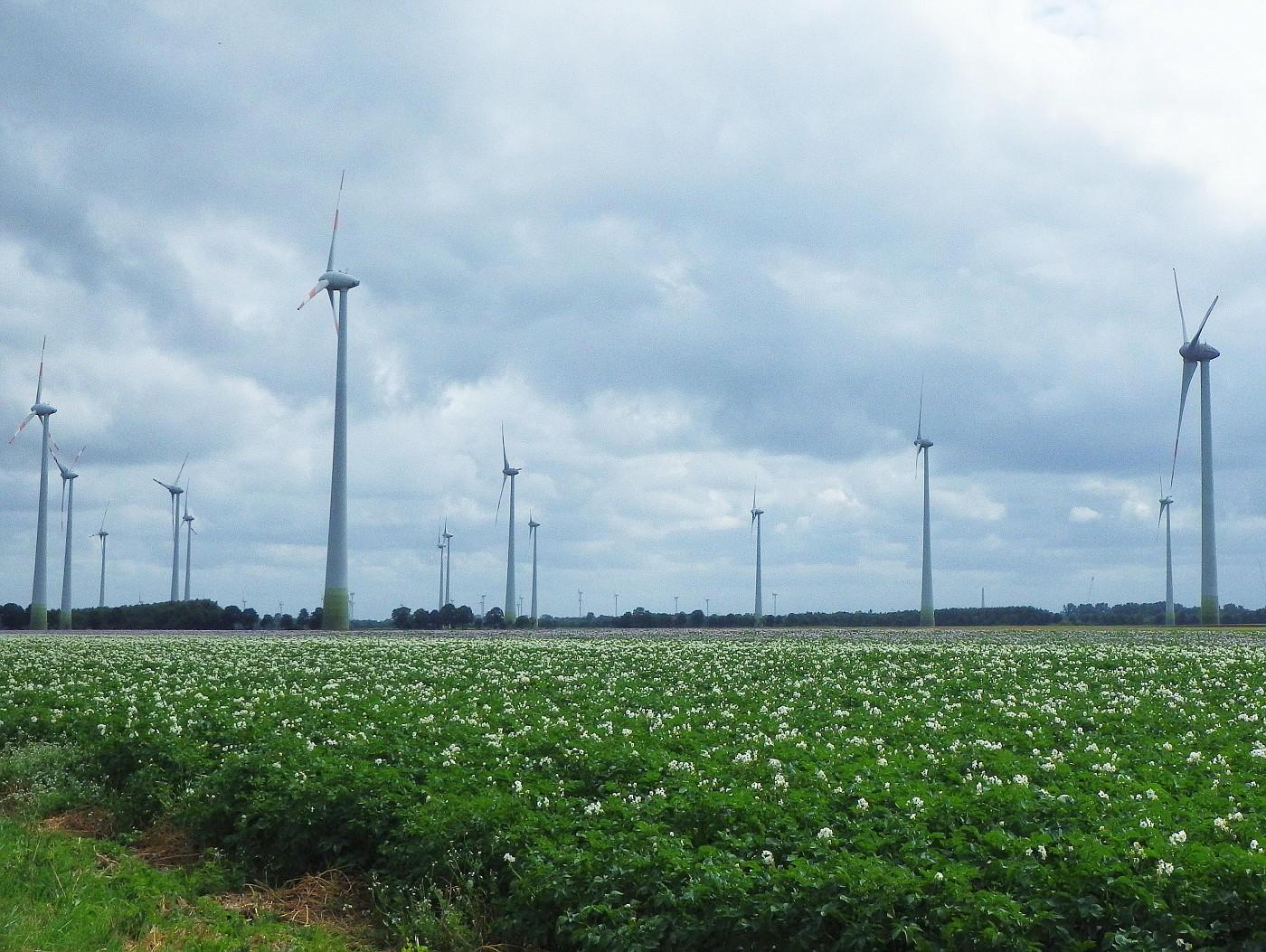 Kartoffeln und Windenergie