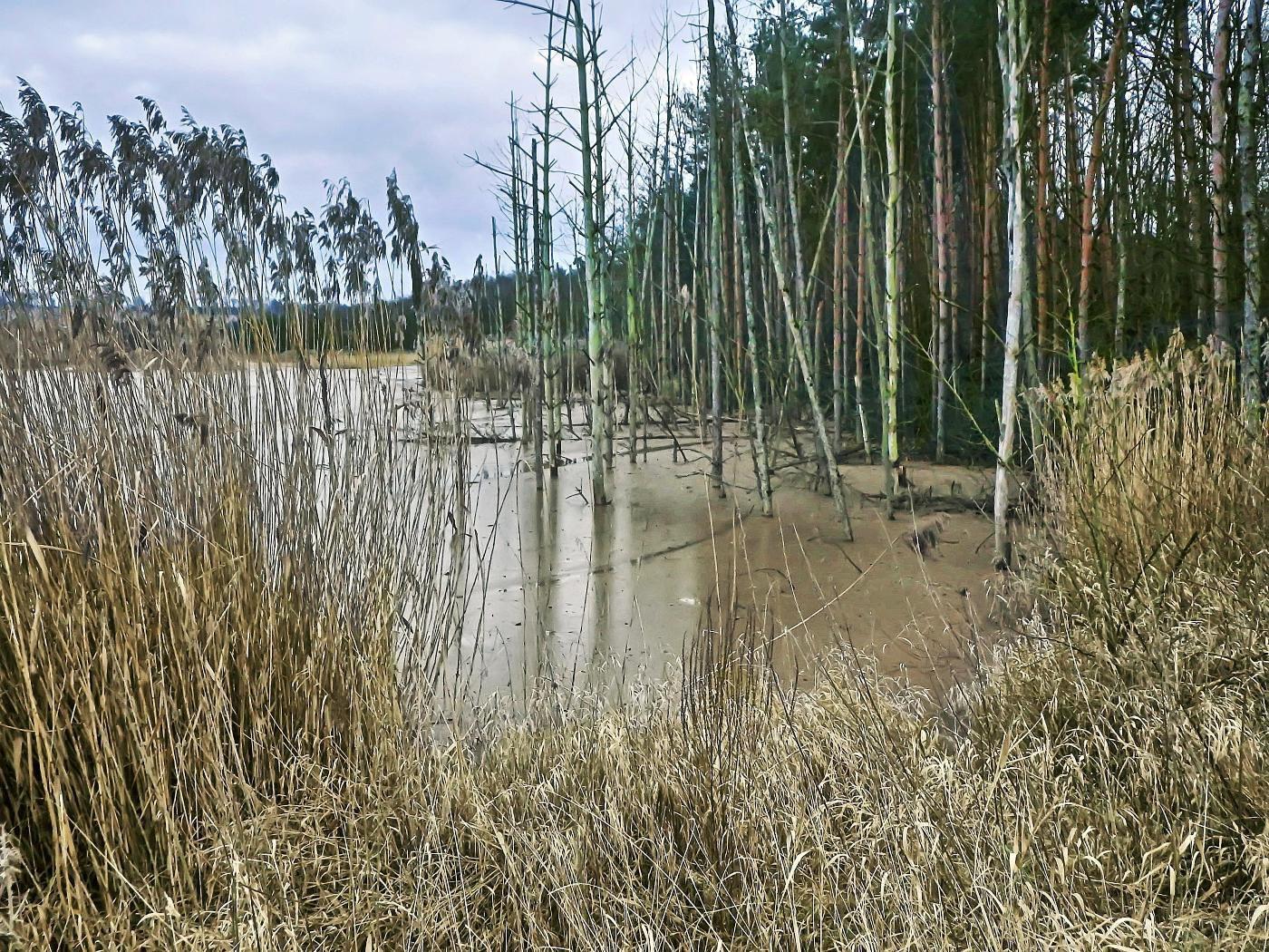 Teich durch Abbau entstanden