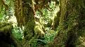 forest-wallpaper-1920x1080-031