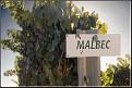 Malbec DSC2972