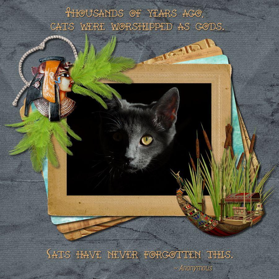 Pharaoh's Cat