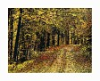 Autumn Trails @2009 R valerie jagiello