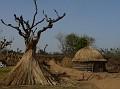 Common homes in the desert