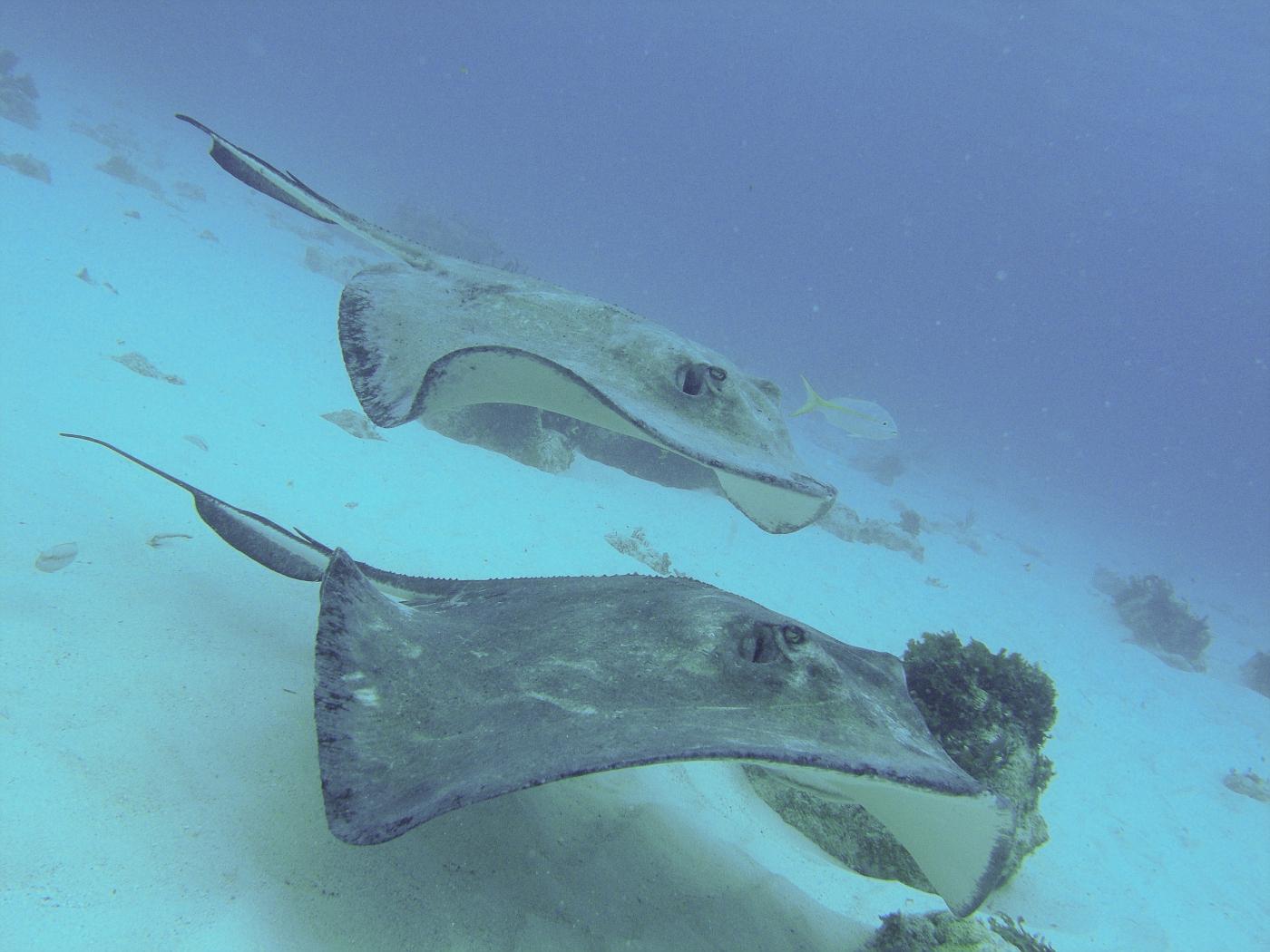 Grand_Cayman-124.jpg