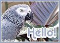Hello010