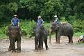 Mae Taeng Elephant Park Show (108)