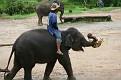 Mae Taeng Elephant Park Show (116)