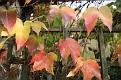 Garden 2011 November 6 (10)