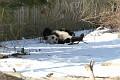 070216 Natl Zoo003