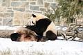 070216 Natl Zoo119