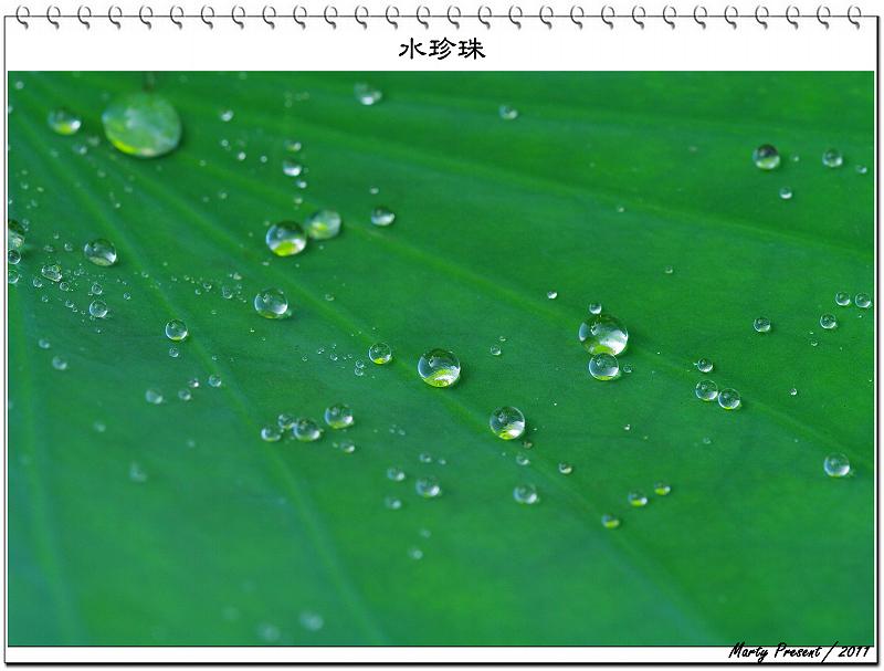 荷葉上的水滴