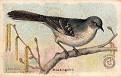 1918 Useful Birds of America Second Series #01 (1)