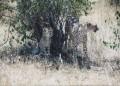 Mara 050