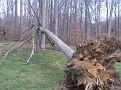 Tree Down (5)