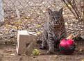 Kruger-November-2012-5105