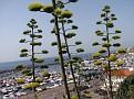 Port Marina - Palamos