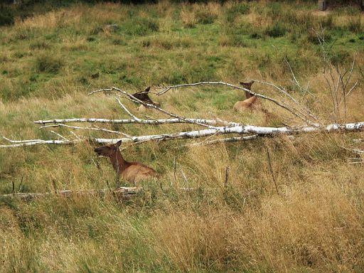 Wildpark Sababurg