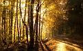 forest-wallpaper-1680x1050-021