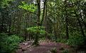 forest-wallpaper-1920x1200-096
