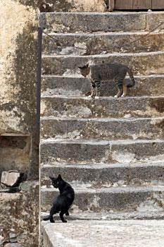 141-Preveli-koty.jpg