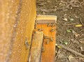 Honey Bee Hives in Mexico   Thank you Octavio Jimenez and your brother Isaac Jimenez in Mexico who tends to the bees  (8)