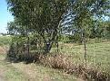 FayCoIaCemWestfieldCountyFarm2012Aug023